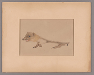 Henry John Van Lennep watercolor drawing of a hedgehog