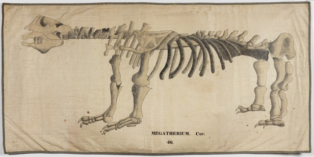 Orra White Hitchcock drawing of megatherium skeleton