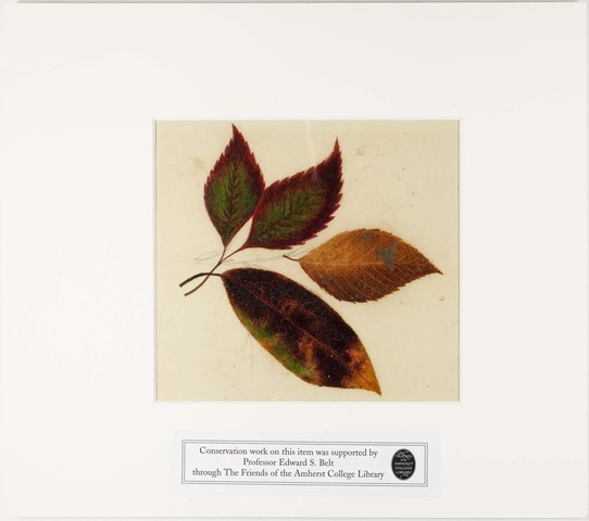 Orra White Hitchcock painting of birch leaves