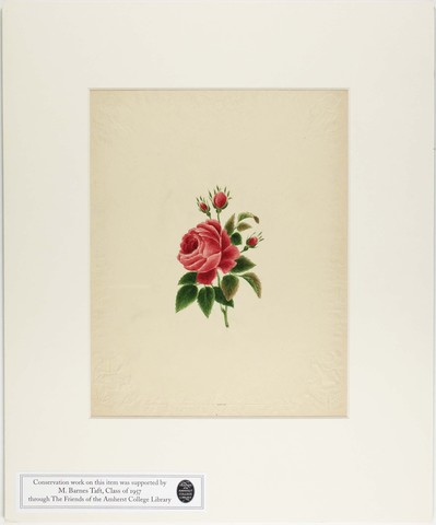 Orra White Hitchcock painting of a rose