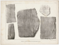 "J. Peckham plate, ""Fossil plants of the new red sandstone,"" 1841"