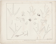 "Orra White Hitchcock plate, ""Feet and Tracks of Living Animals,"" 1841"