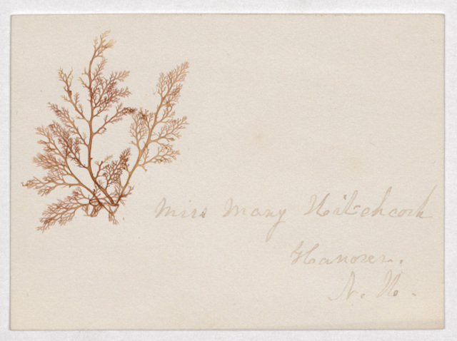 Mary Hitchcock botanical scrapbook and calling card to Sarah J. Cowles