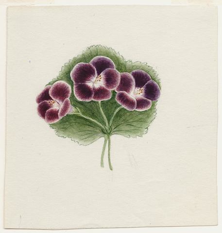 Watercolor drawing of a sprig of three unidentified purple flowers